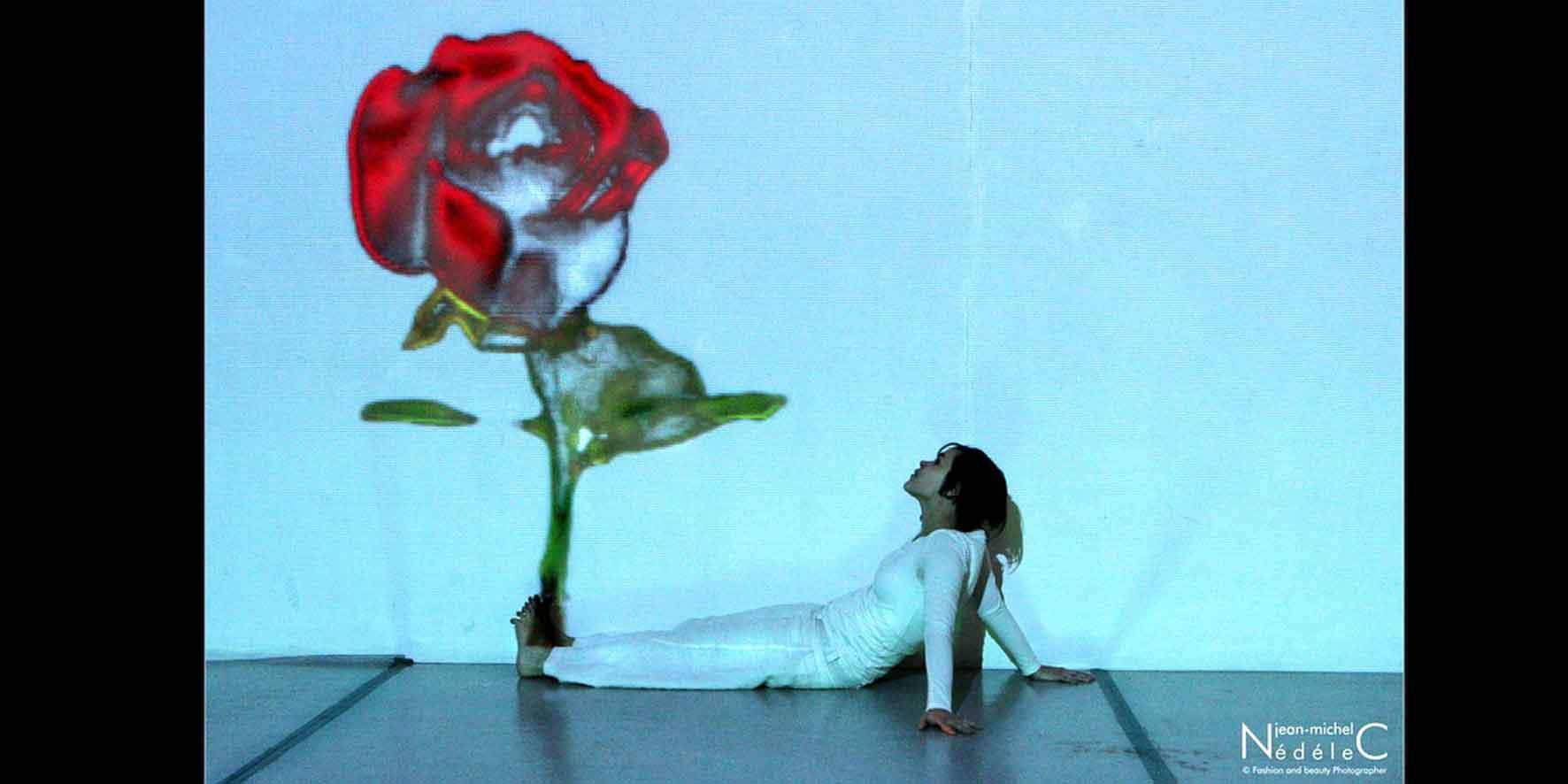 Rose-est-une-rose5